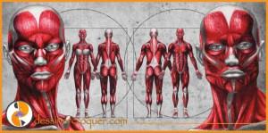 Dessiner LE CORPS HUMAIN – 4